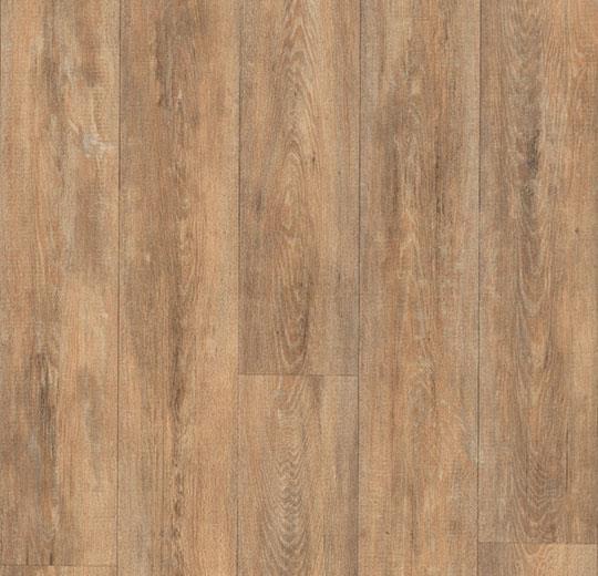 6242 Selmore Oak